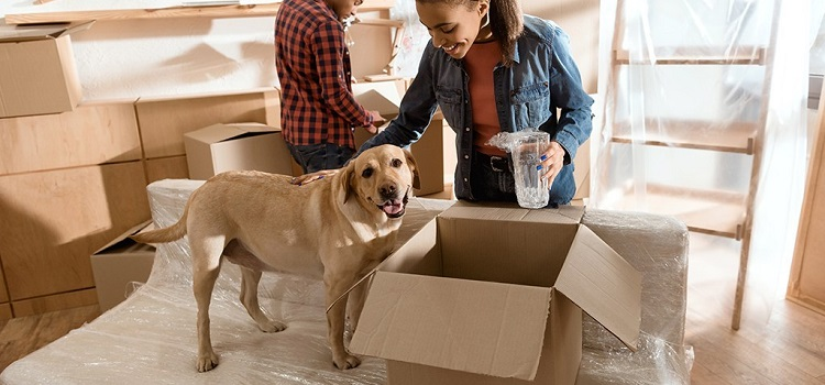 Relocating with Aged Pets